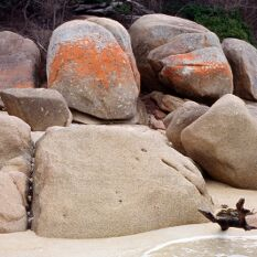lichen covered boulders at Freycinet - I've always had a thing for orange in landscapes